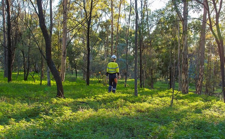 NSW mine rehab policy producing results: DPIE