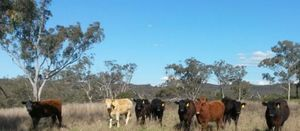 Bylong protest highlights farmer fears