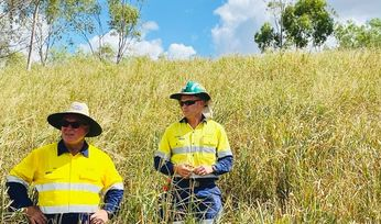 Oaky Creek rehab receives Qld govt certification