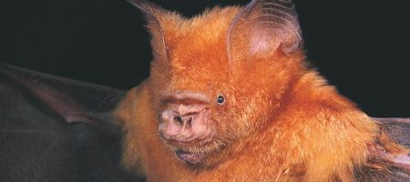 Wollongong Coal's bat problem