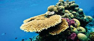 Turnbull reef plan attacked