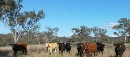 Bylong mine impact on farming land is limited: DPIE