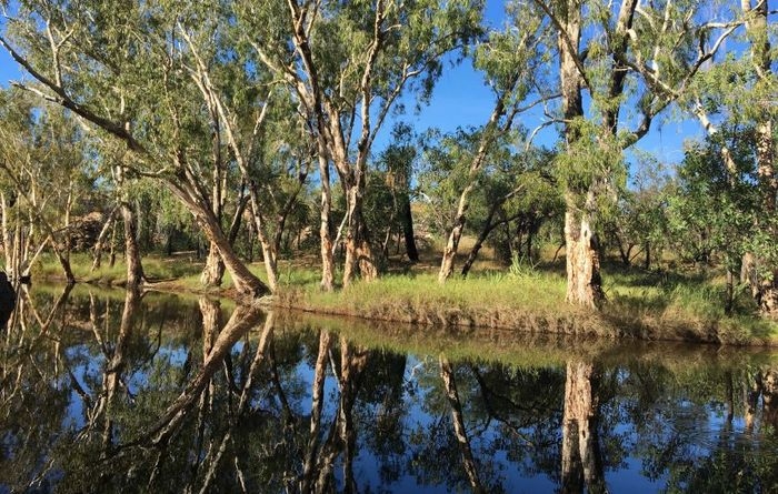 McArthur River lead still a risk, report says